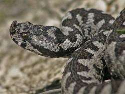 Πρόβλημα με φίδια
