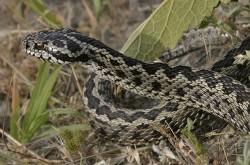Φίδια στον κήπο