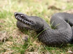 Φίδια αντιμετώπιση