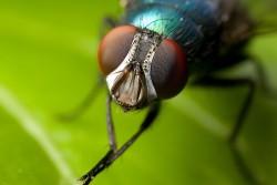 μύγες καταπολέμηση