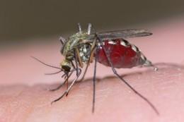 καταπολέμηση κουνουπιών στον κήπο