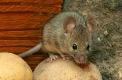 Καταπολέμηση ποντικών τιμή