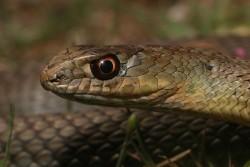 Δηλητηριώδη φίδια