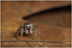 αράχνη αντιμετώπιση